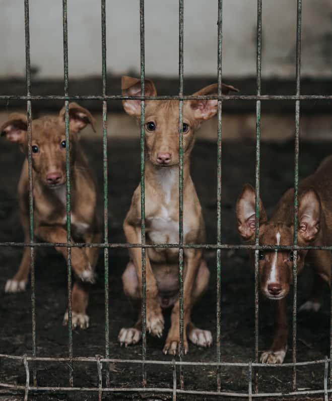 Pravna zaštita životinja