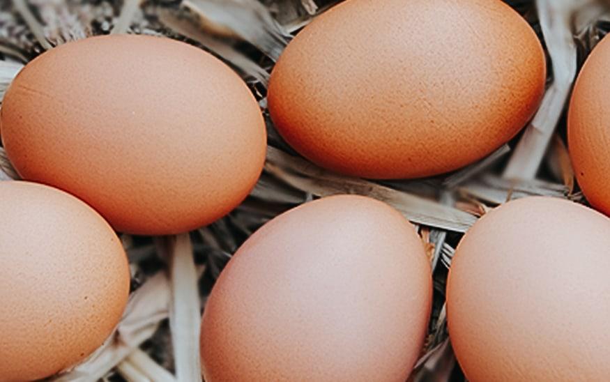 Svetski dana jaja