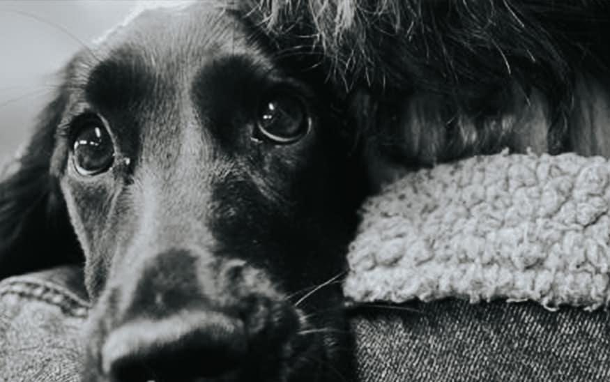 Razvoj svesti o značaju dobrobiti životinja ponovo u zakonu!