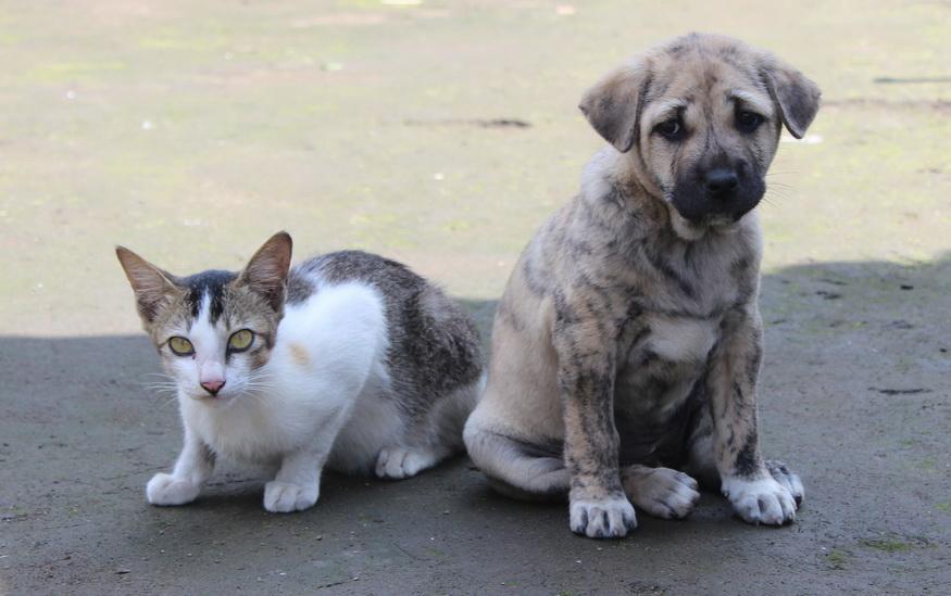 Napušteni pas i mačka sede na ulici i tužno gledaju.