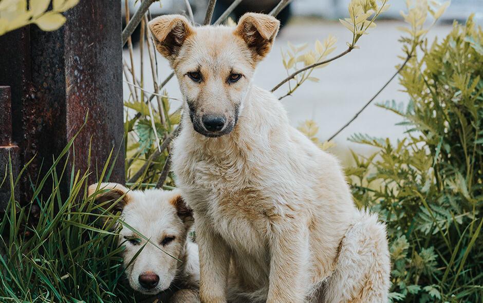 Kontrola populacije pasa