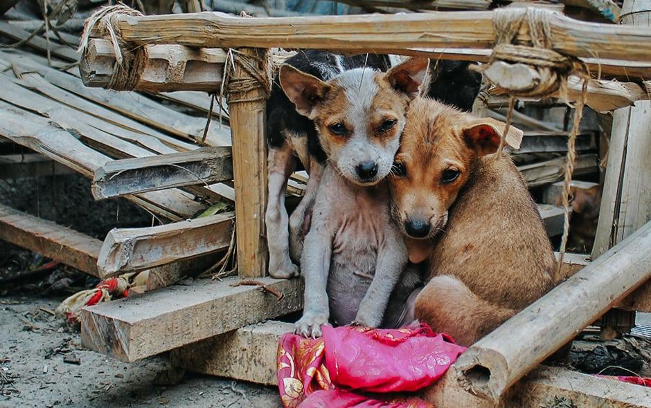Kontrola populacije pasa u Srbiji