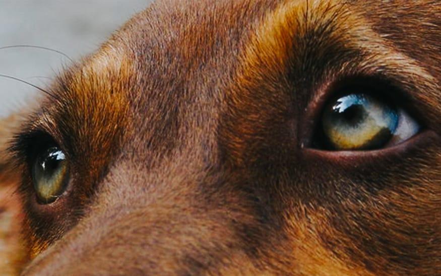 Tesko zlostavljanje psa u Grockoj – reakcija ORCA