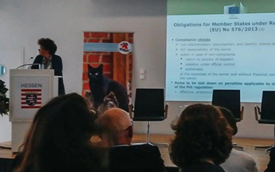 Konferencija o identifikaciji pasa