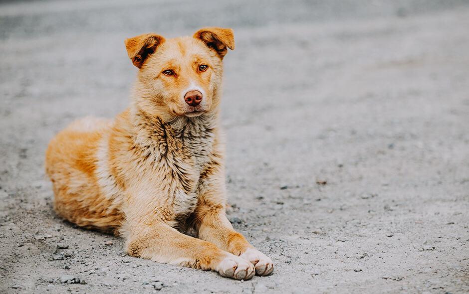 Kontrola populacije pasa u Srbiji II