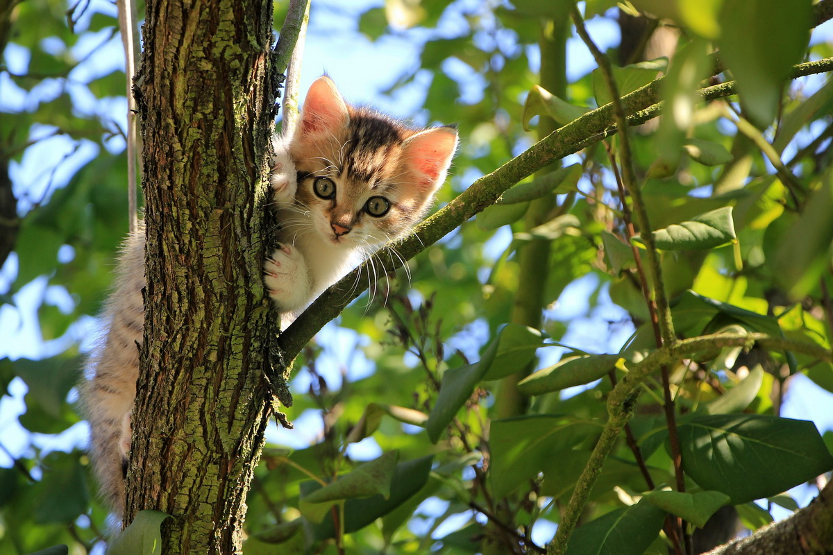 Mače sedi na grani drveta