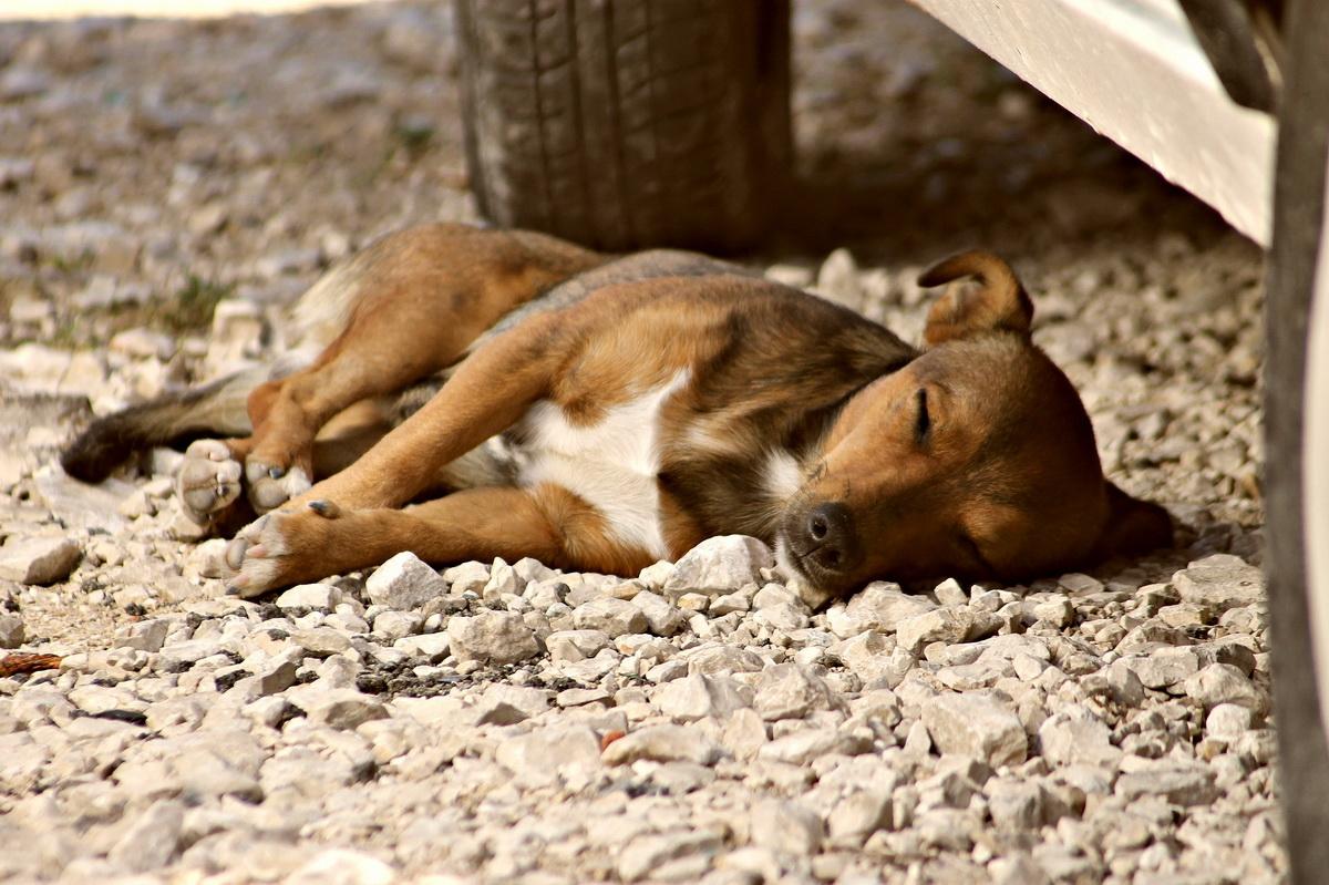 Napušten pas spava pored automobila