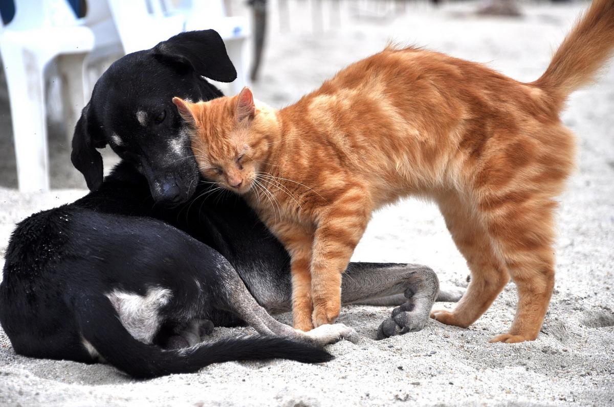 Napuštene životinje - pas i mačka na ulici