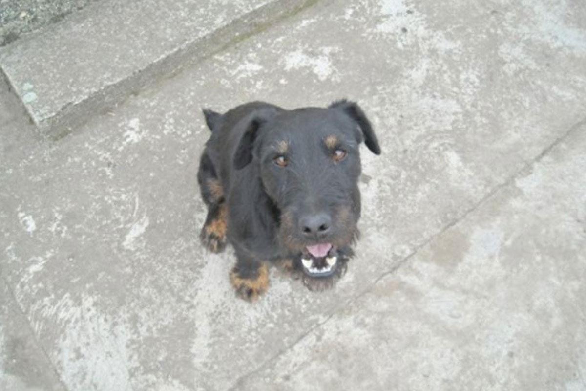 """Pas Kića kojeg je udomilo Udruženje za zaštitu prava životinja """"BAK"""""""