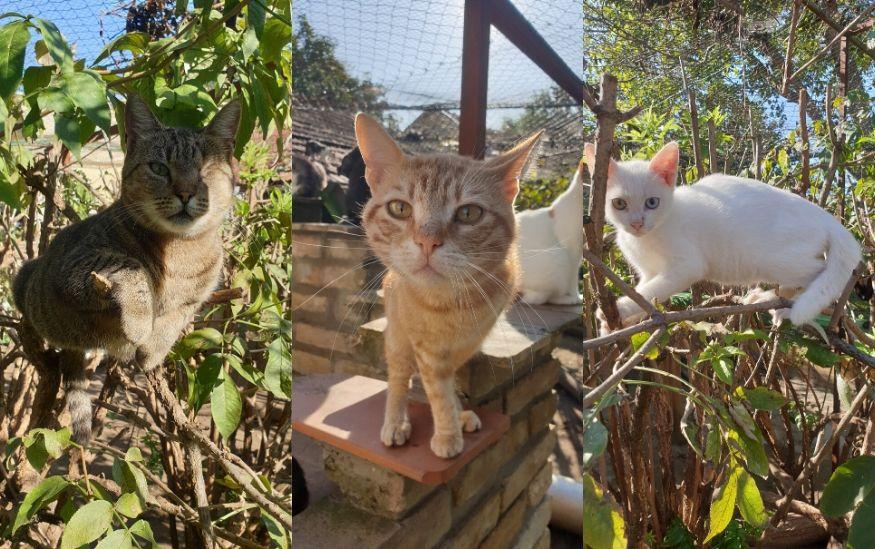 Mačke iz Felinološkog društva Feliks