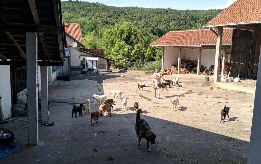 """Psi o kojima brine Društvo za zaštitu životinja """"Stič"""""""