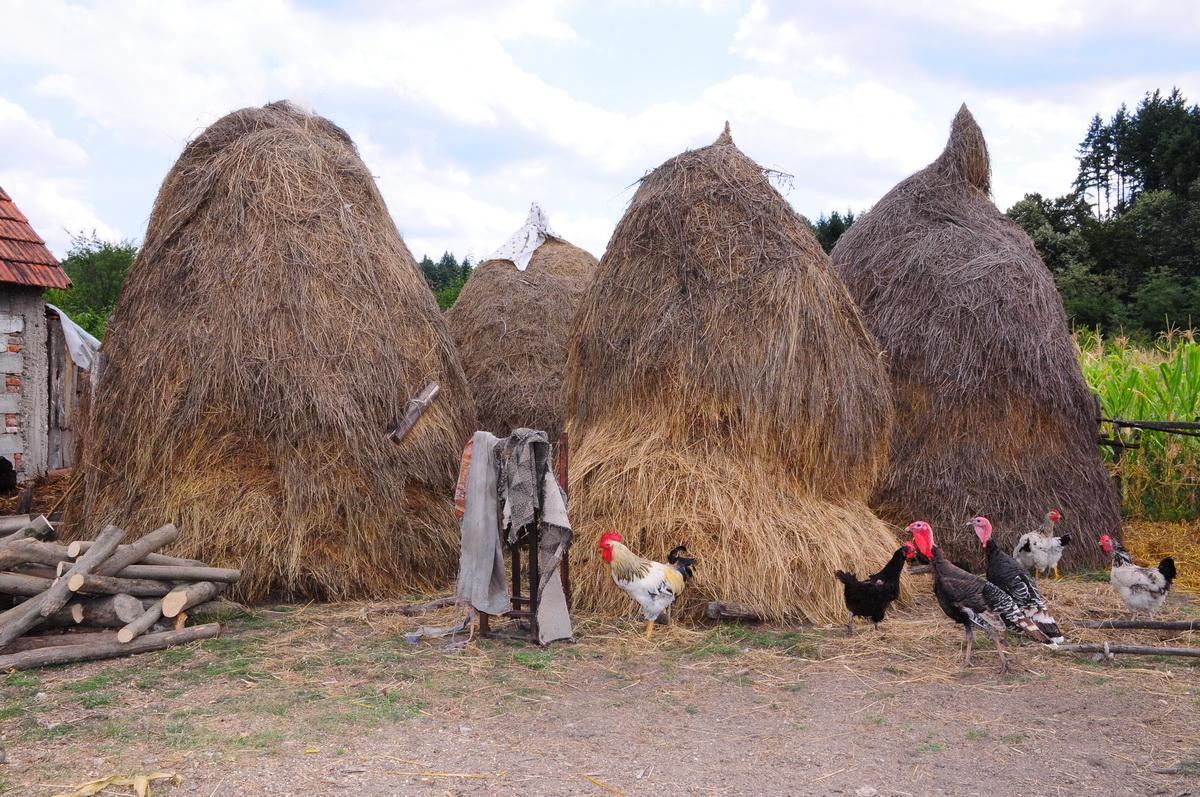 Farma kokošaka i ćuraka u Srbiji
