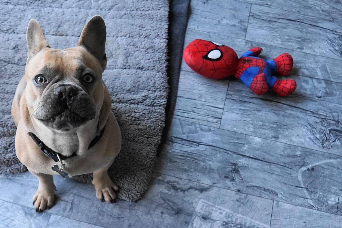 Pas sedi pored igračke