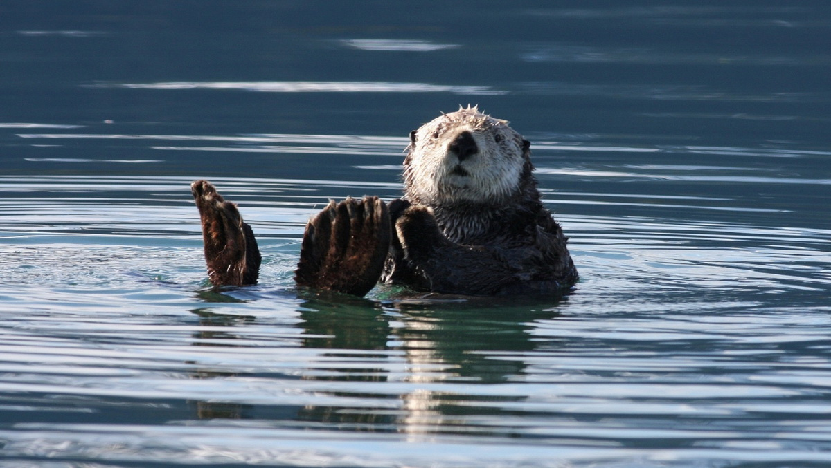 Morska ividra leži u vodi