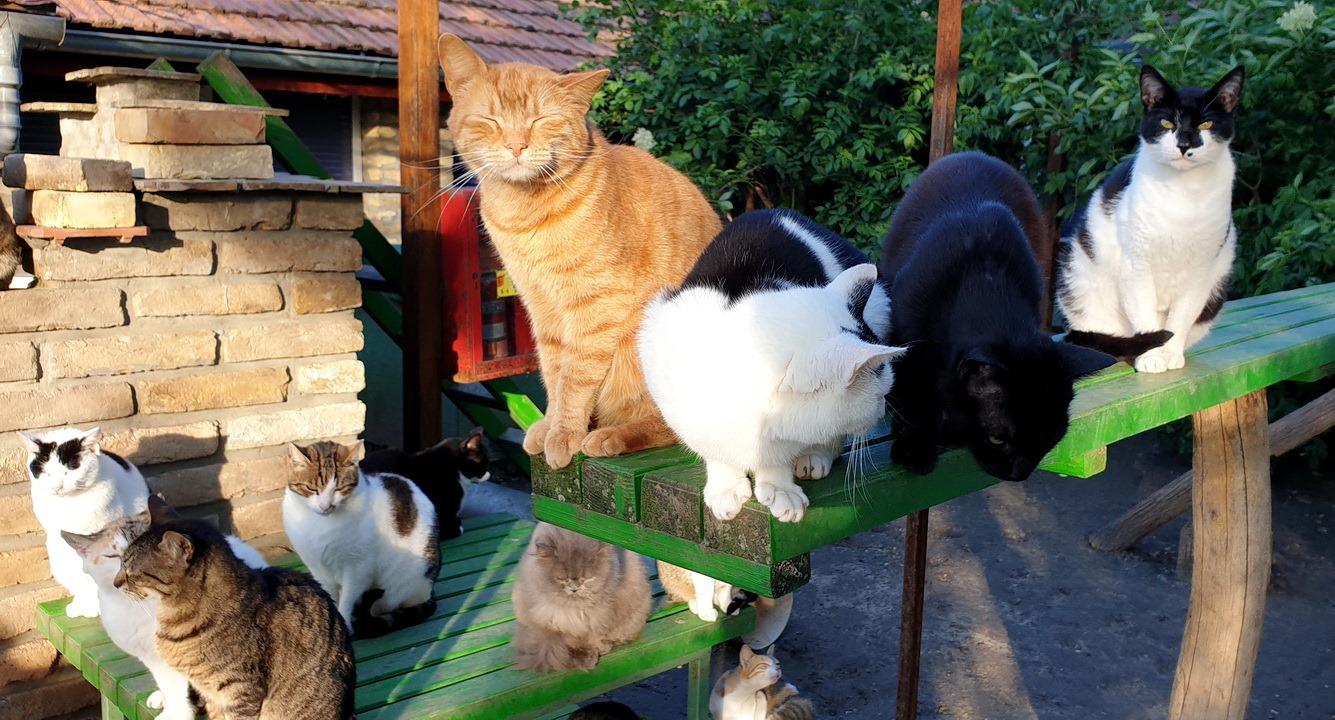 Felinološko društvo Feliks i mačke iz prihvatilišta.