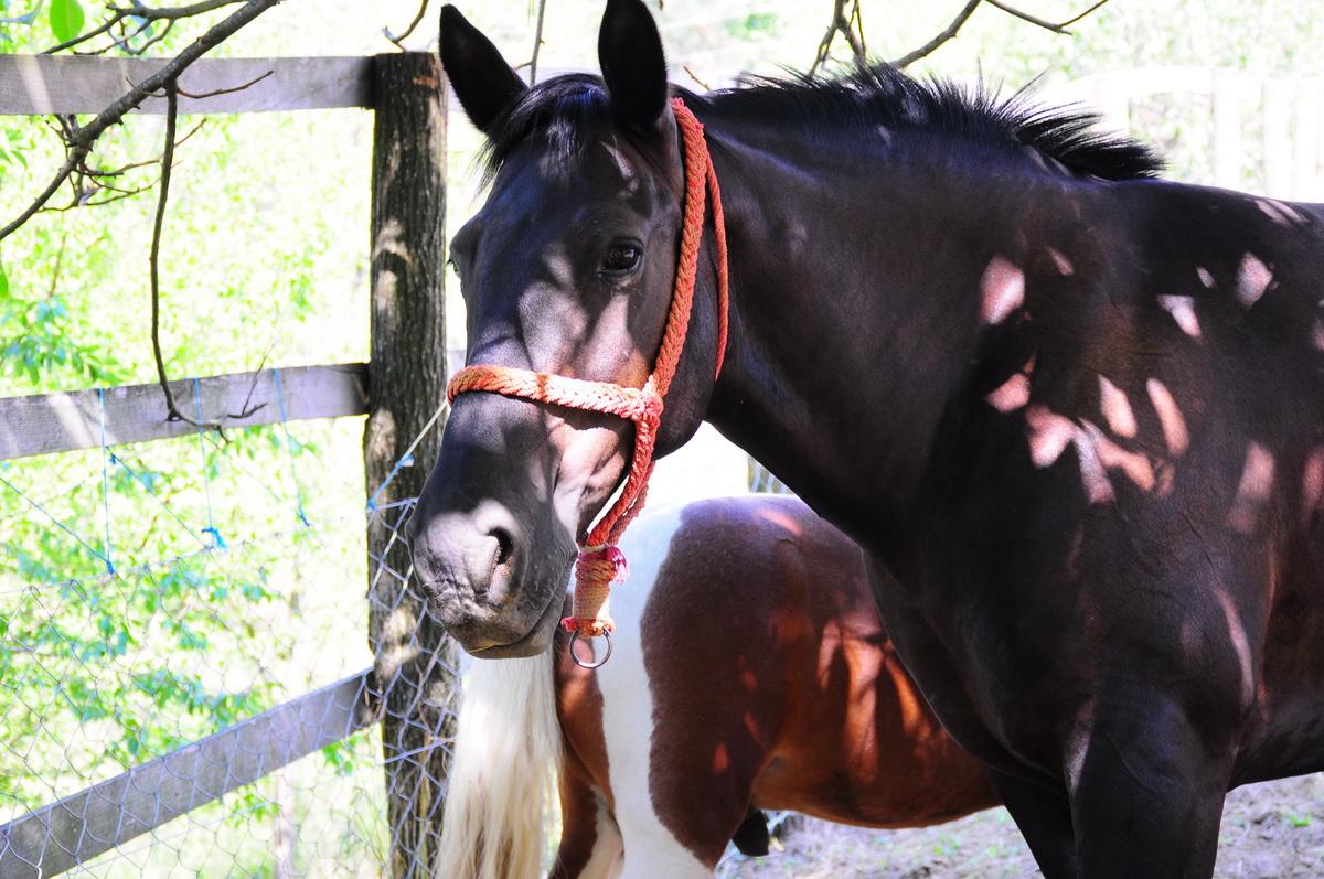 Konj na farmi koja se bavi slobodnim uzgojem životinja