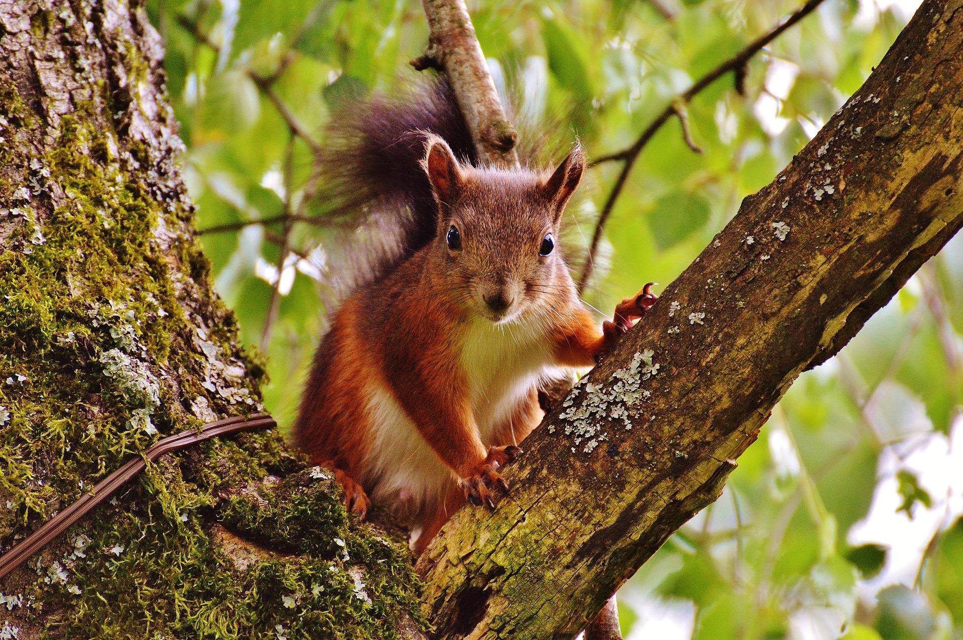 Veverica sedi na grani drveta