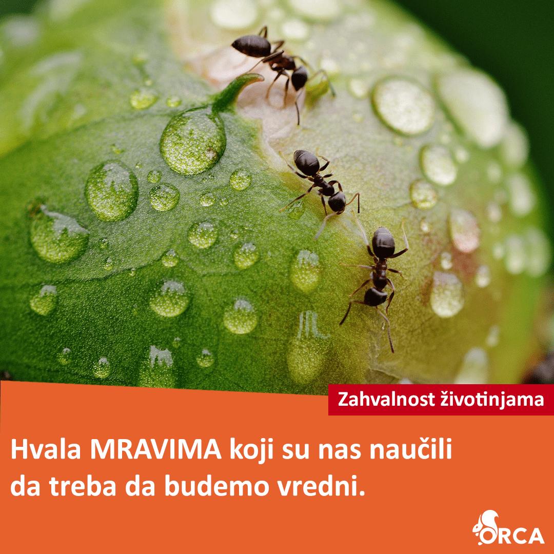 Tri mrava na mokrom listu