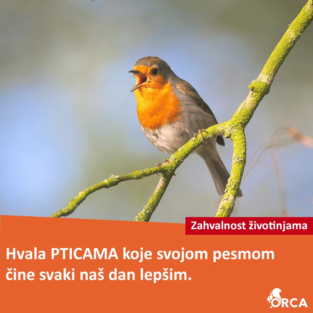 Ptica stoji na grani i peva