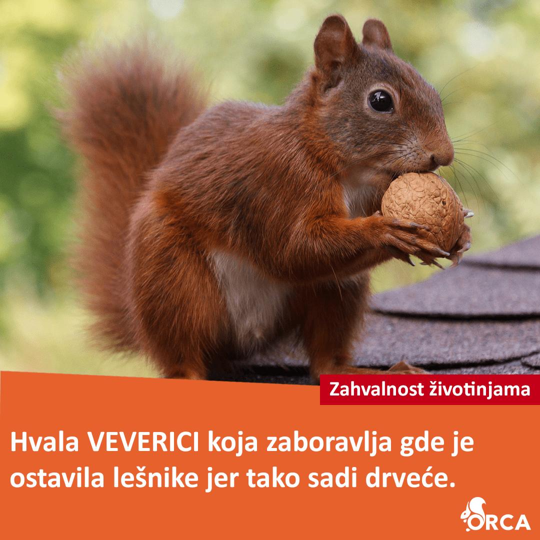 Zahvalnost veverici koja sadi drveće