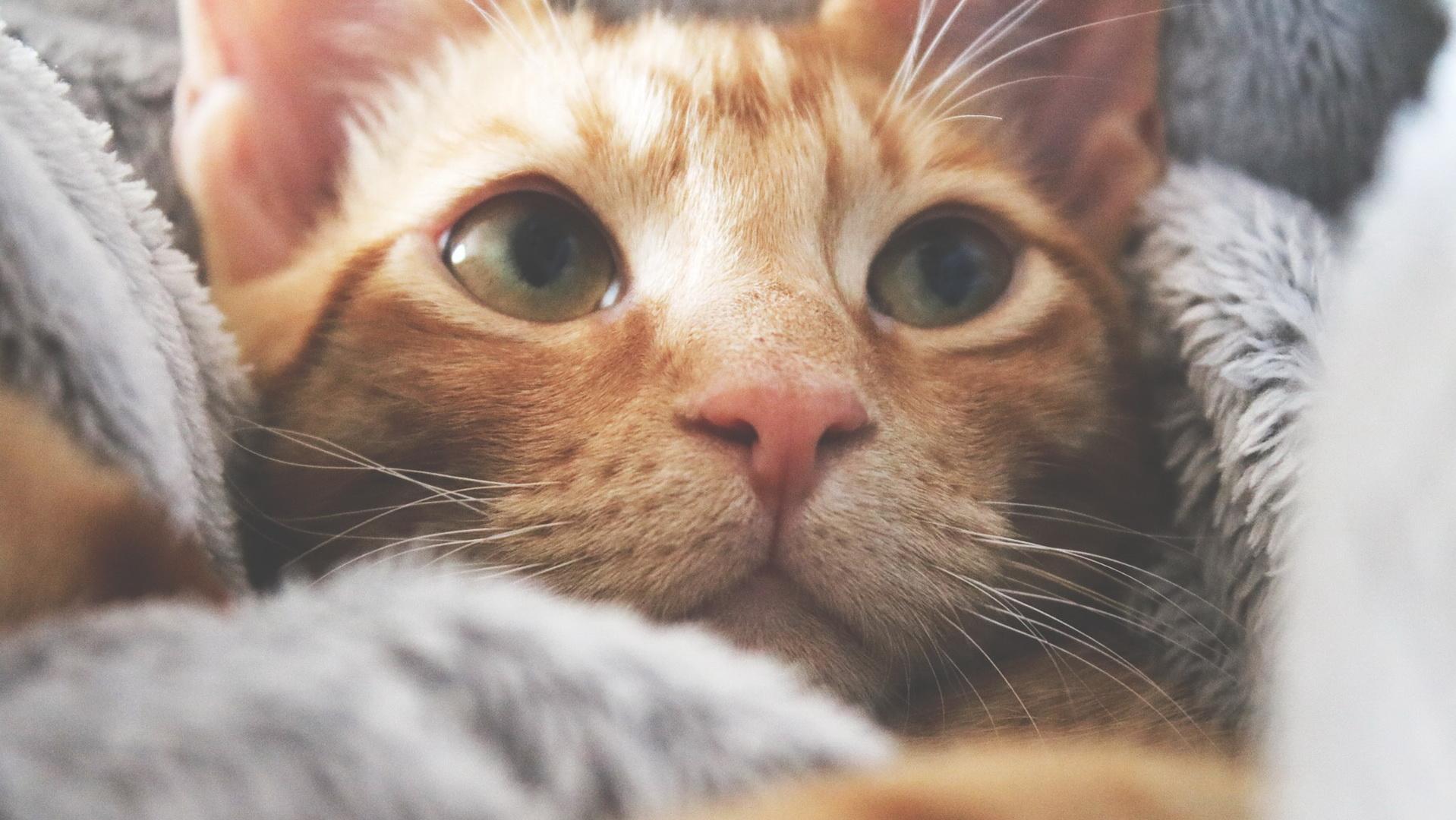 Mačka leži na krevetu ušuškana u ćebe
