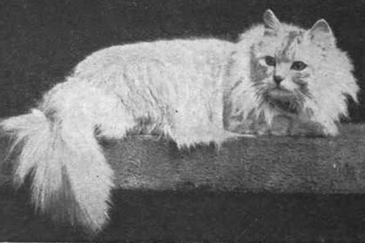 krupni krugovi maca