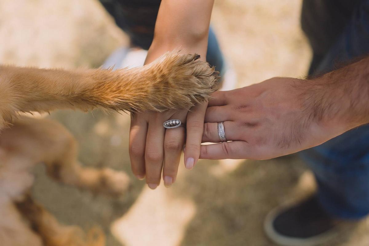 Povezanost udomljenog psa i njegovih vlasnika