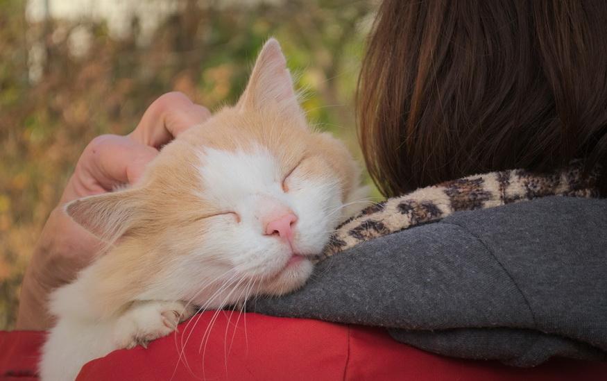 Mačka spava na ramenu devojke