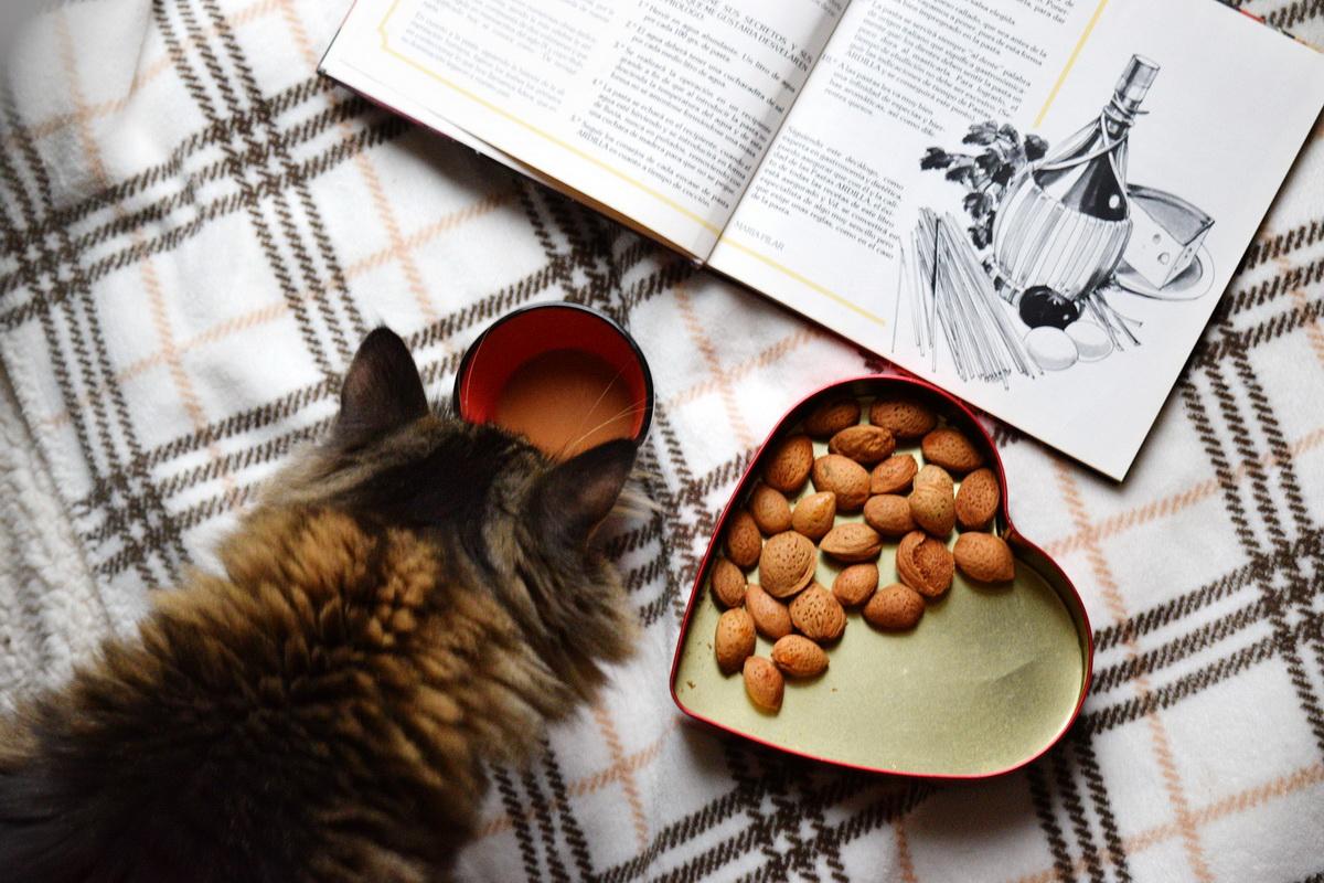 Zdrava ishrana mačaka