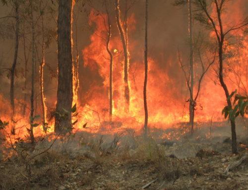 Požari u Australiji: stradalo 480 miliona životinja