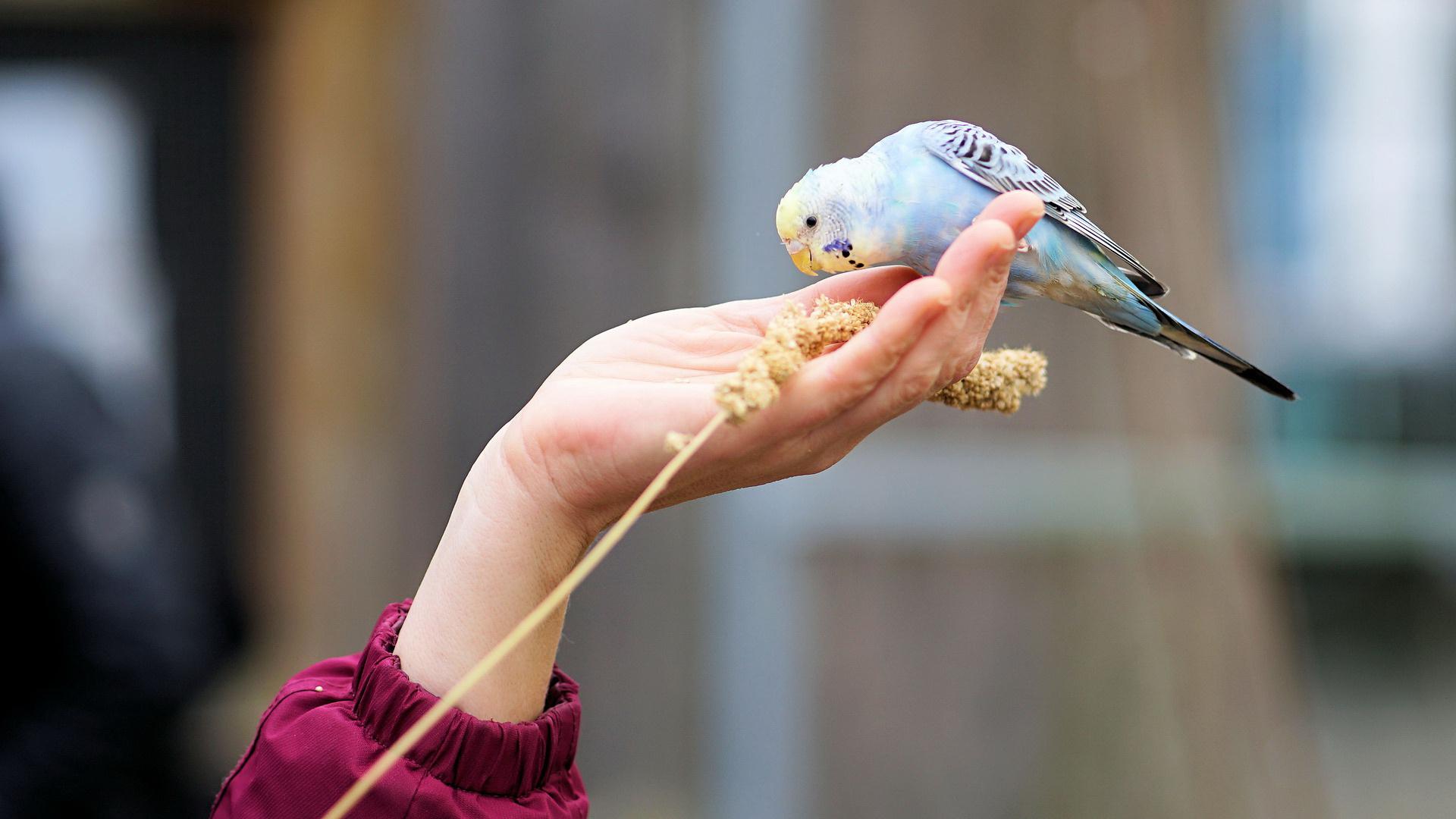 Ptica jede iz ruke