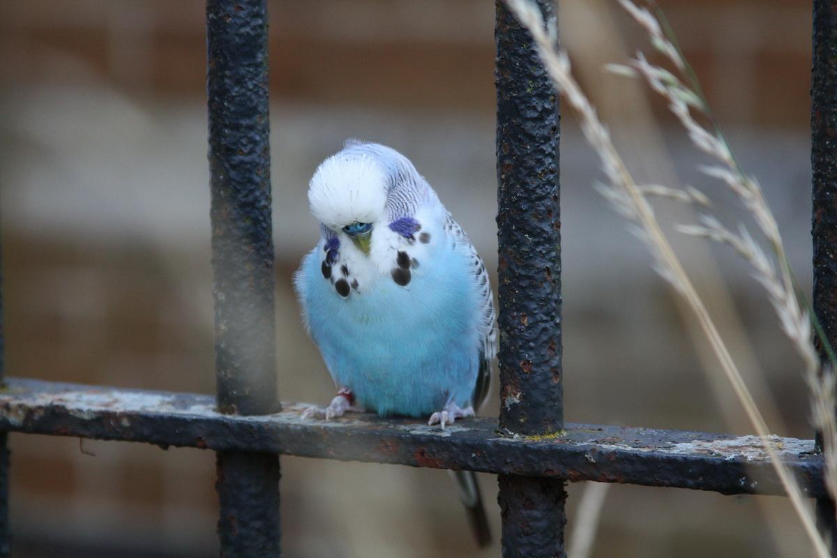 Ptica na grani
