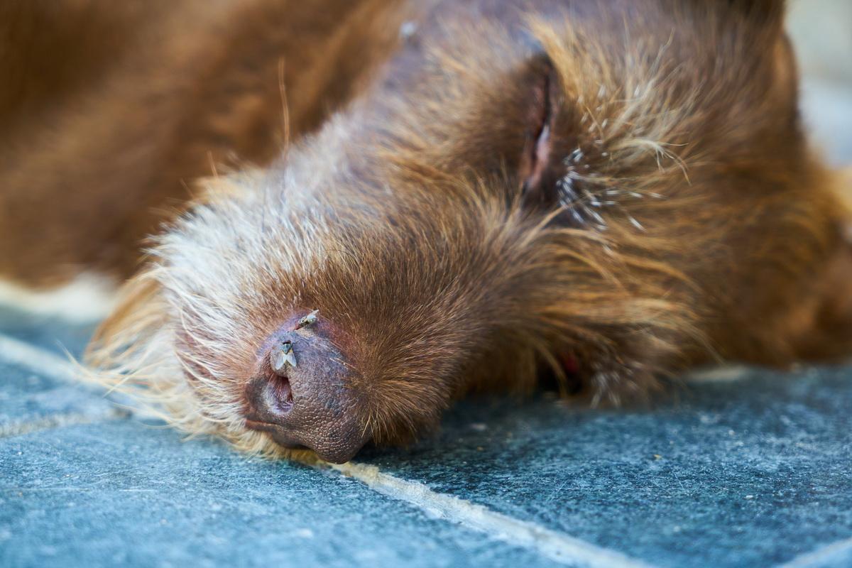 Smrt kućnog ljubimca - psa