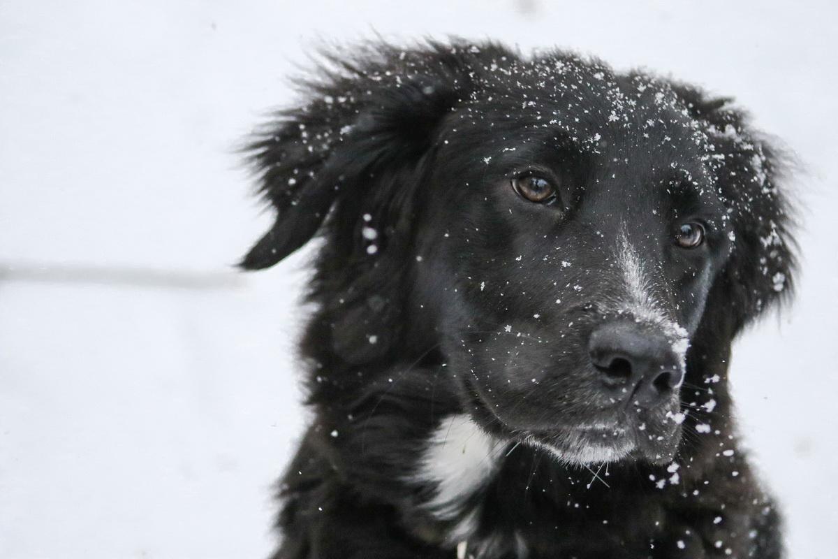 Kućni ljubimac na snegu tokom zime