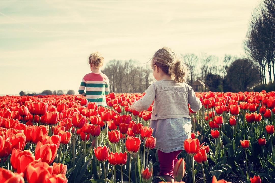 Deca šetaju kroz polje lala