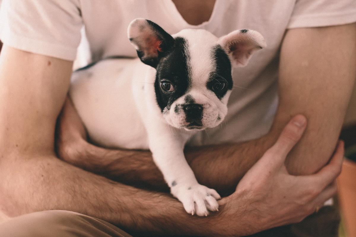 Čovek se brine o psu u pansionu za pse