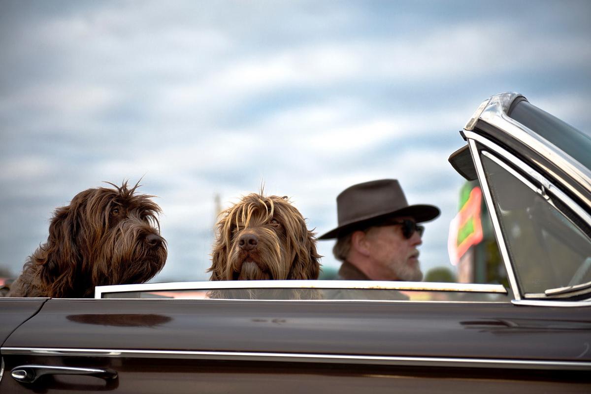Dva psa odlaze na put sa svojim vlasnikom