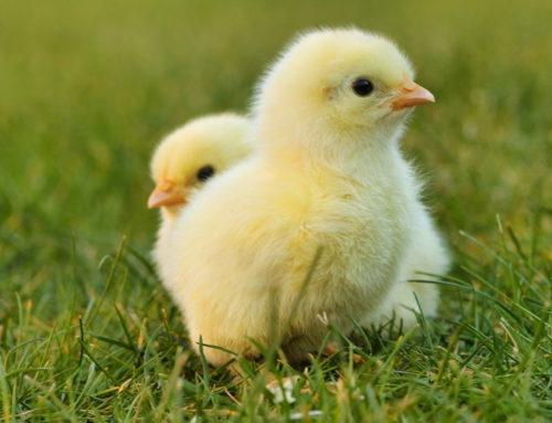 COVID-19 nas uči tešku lekciju: moramo promeniti naš odnos prema životinjama