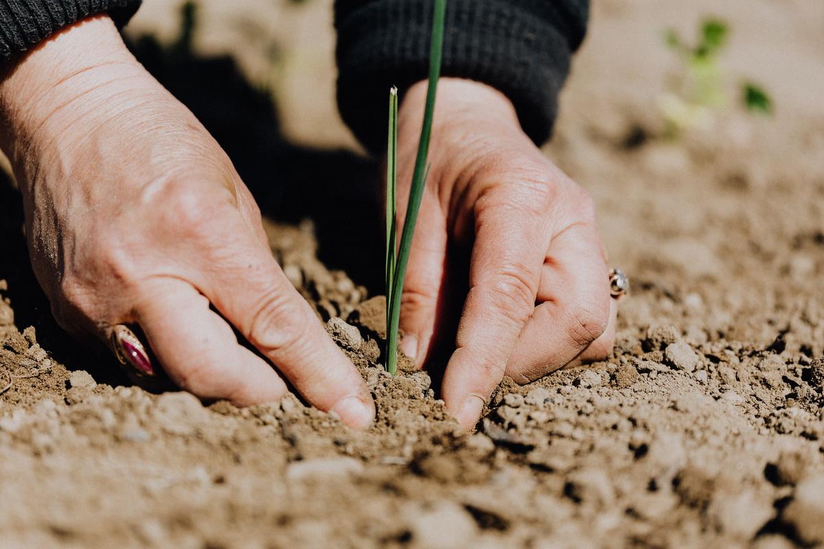 Zaštita životne sredine na delu. Žena sadi biljku.