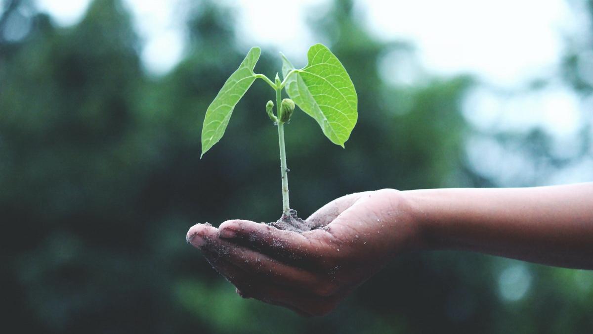 Ekologija je nauka o životnoj sredini. Ime nauke potiče od grčkih reči oikos - dom, domaćinstvo i logos - nauka, izučavanje.