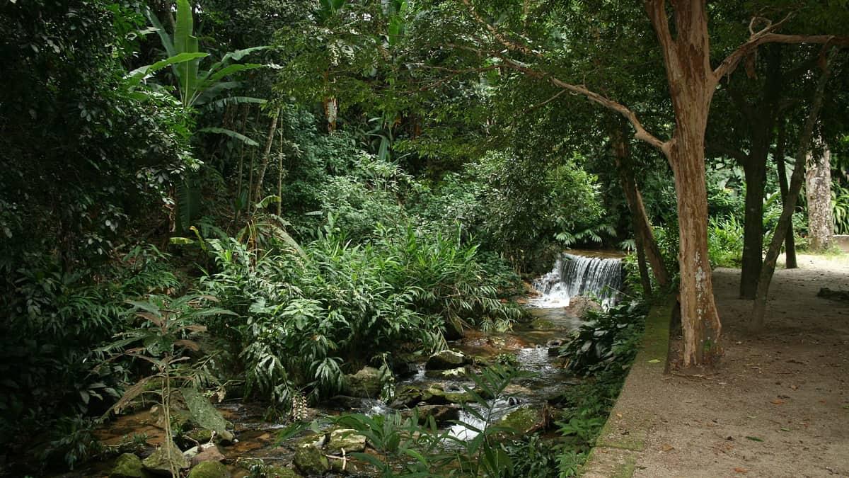 Tižuka, urbana šuma