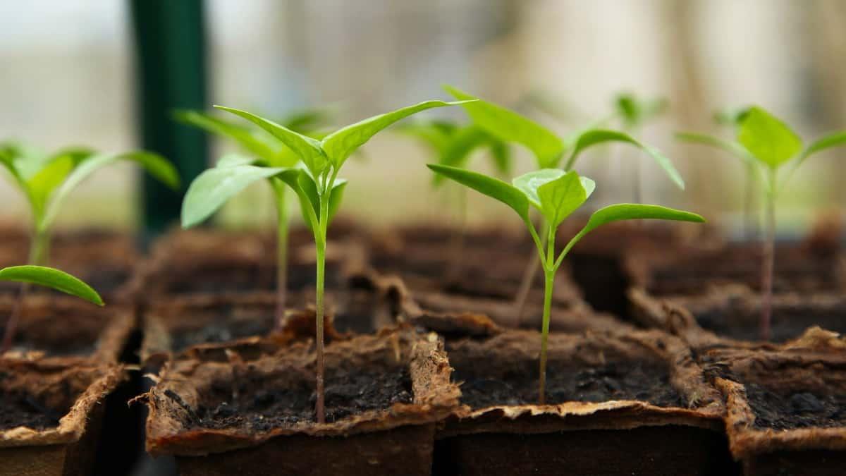 Kako nastaje efekat staklene bašte