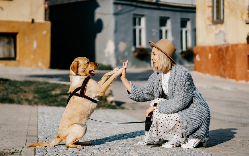 Devojka i pas srećno šetaju ulicom