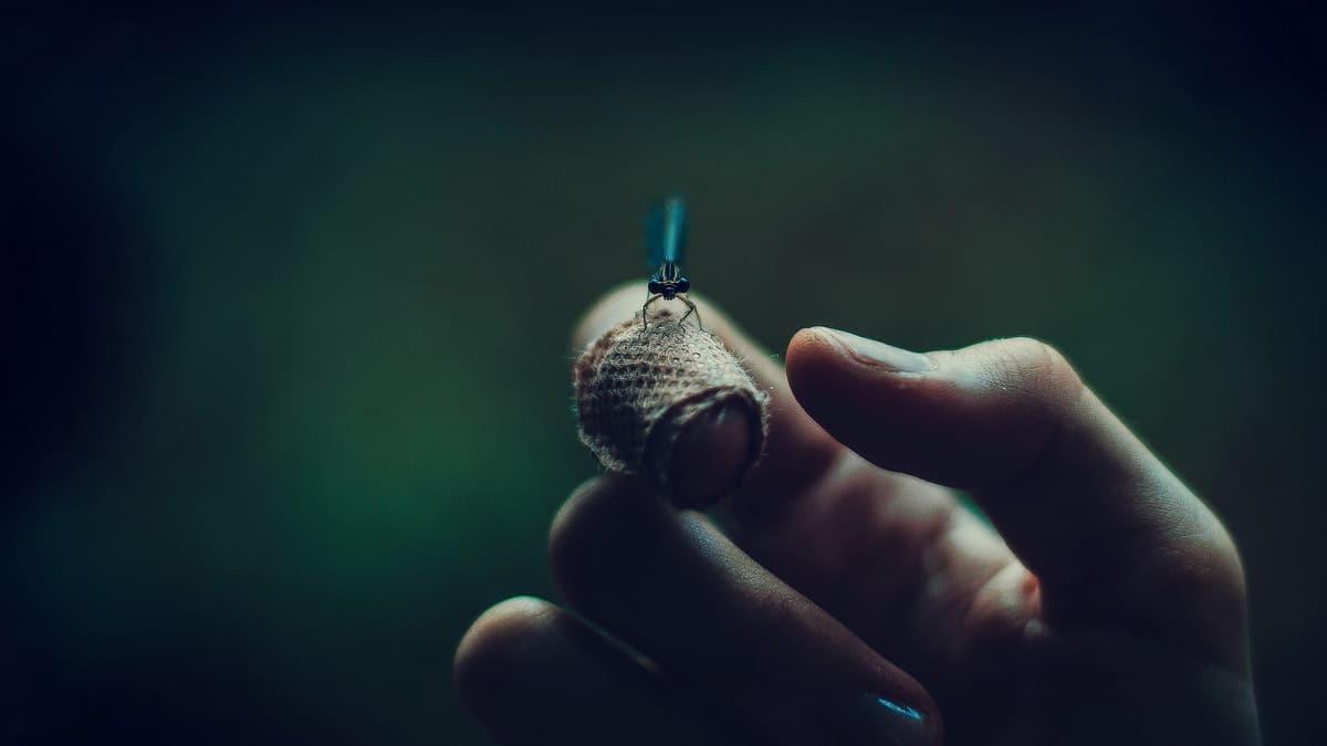 Svitac sija na ruci