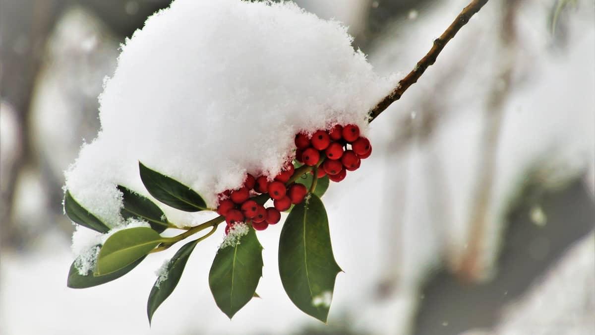 Kako se biljke prilagođavaju zimi