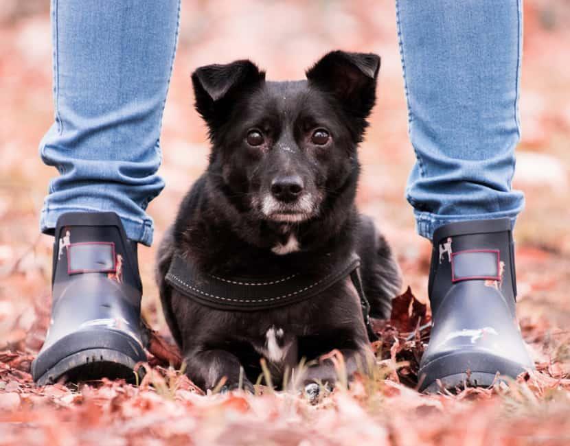Kućni ljubimac - pas, sa svojim vlasnikom