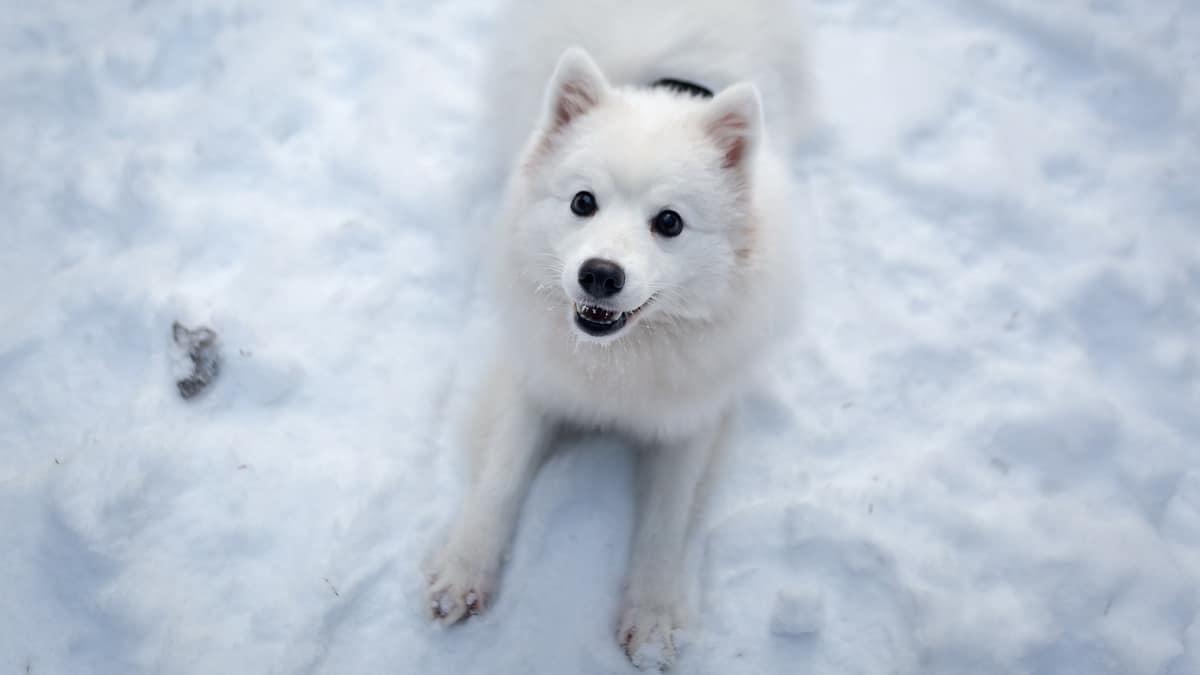 Pas leži na snegu i čeka da krene u šetnju