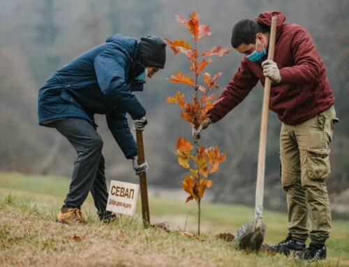"""Udruženje """"Sevap"""": Drvo generacije"""