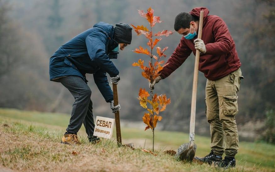 Drvo generacije u Vlasotincu