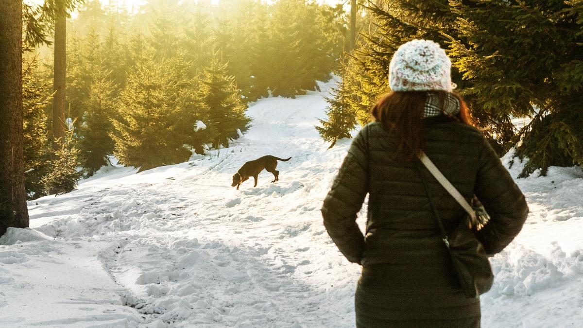 Zimska setnja sa psom u sumi pod snegom.